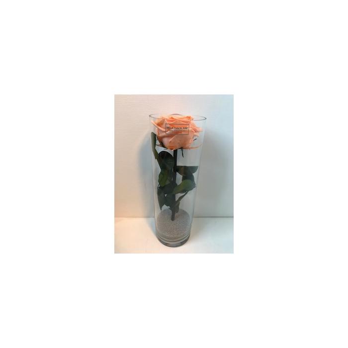 <h4>Glass d10x30cmh Roos Perzik</h4>