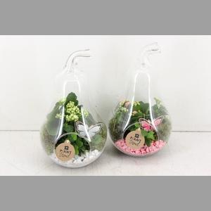 arr. PL - Glazen peer - roze/wit
