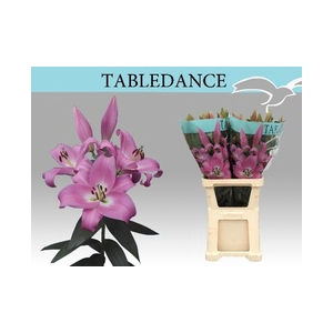 Lilium oriental Tabledance