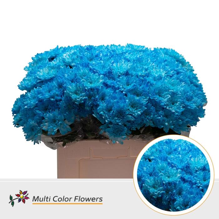 <h4>Chrys.tros Baltica wit gekleurd Blauw licht</h4>