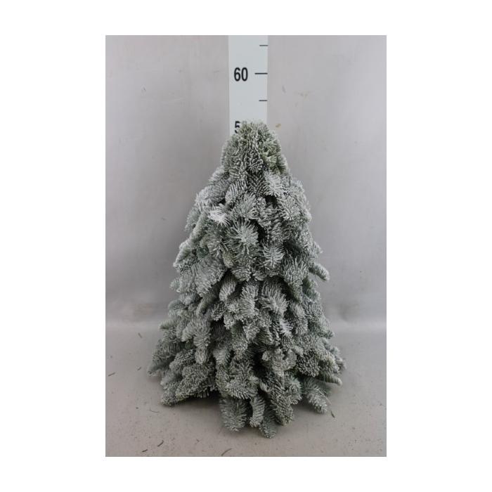 <h4>Kerstboom   ...sneeuw</h4>
