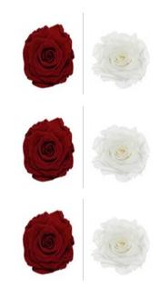 <h4>R Gr Prsv White - Deep Red</h4>