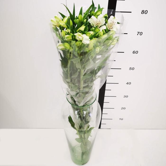 <h4>Alstroemeria blanca</h4>