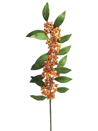 <h4>Euphorbia fulgens Quinette 81cm orange</h4>