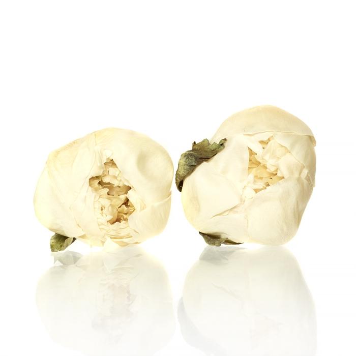 Peony white 4-4,5cm