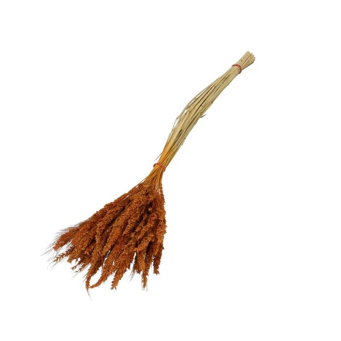 <h4>Droogbloem Pinion gras 45cm</h4>