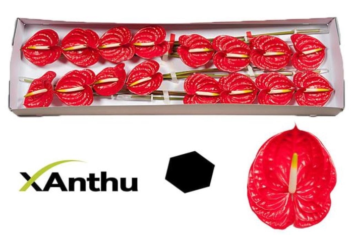 <h4>ANTH A TROPICAL</h4>
