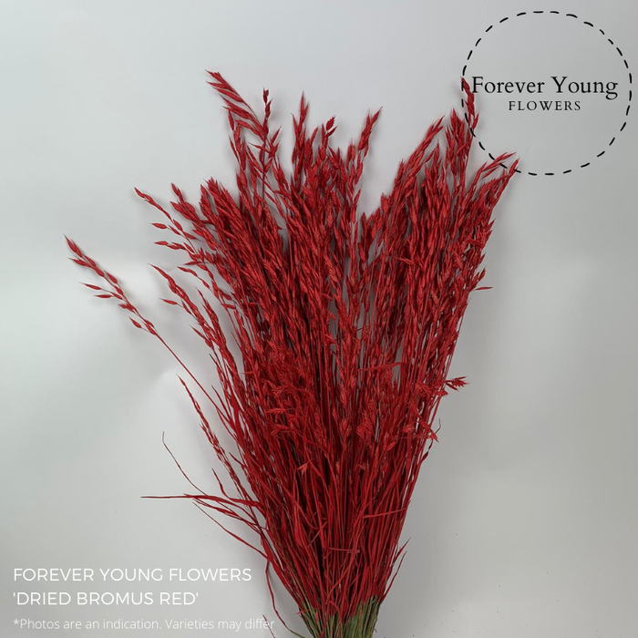 <h4>DRIED BROMUS RED</h4>