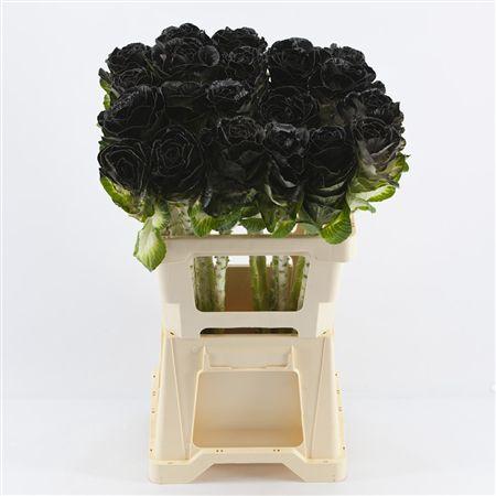 <h4>Brassica Black</h4>