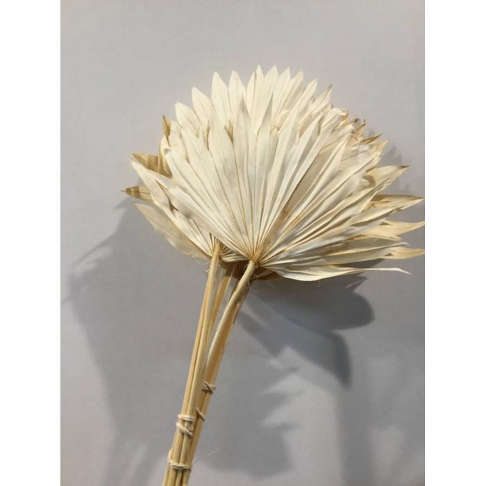 <h4>DRIED FLOWERS - PALM SUN 10PC BL WHITE</h4>
