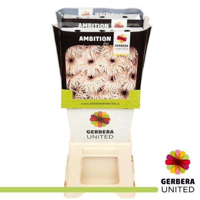 <h4>Gerbers Spider Cream</h4>