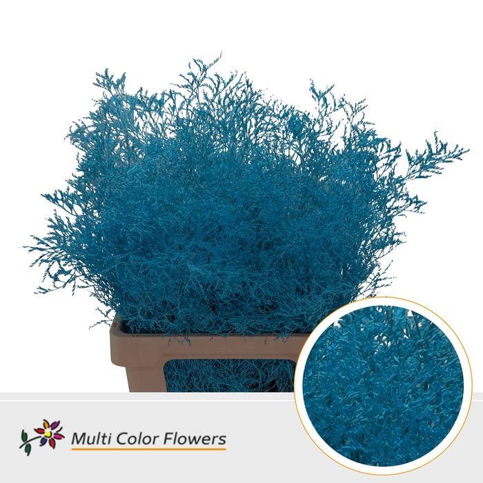 <h4>Limonium Beltaard Blauw licht</h4>