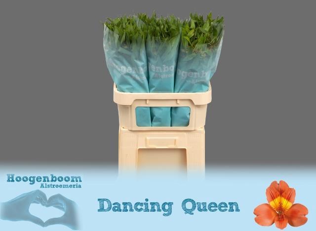<h4>Alstro. Dancing Queen</h4>