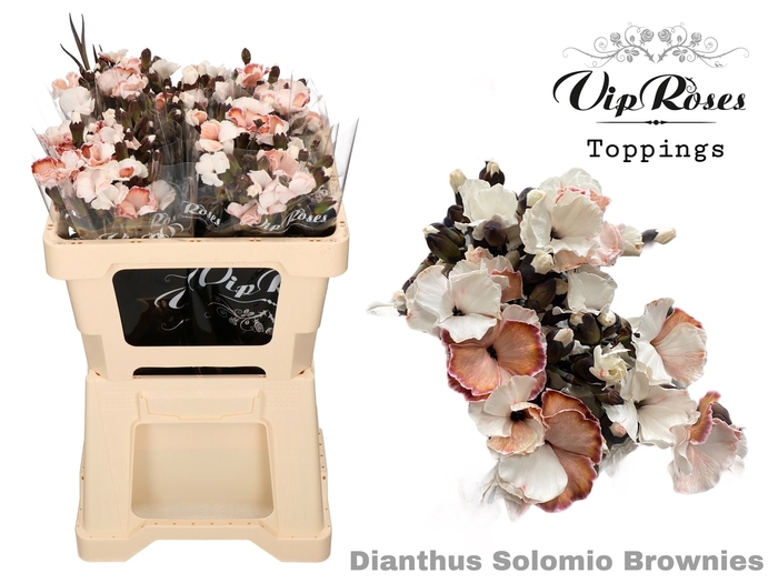 <h4>DI SOLOMIO BROWNIES (L50cm)</h4>