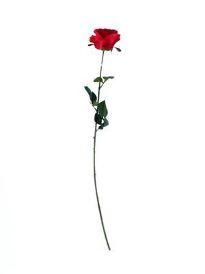 <h4>Af Rose Camelot 74cm Scarl.red</h4>
