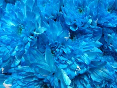 <h4>Chr T Baltica Light Blue</h4>