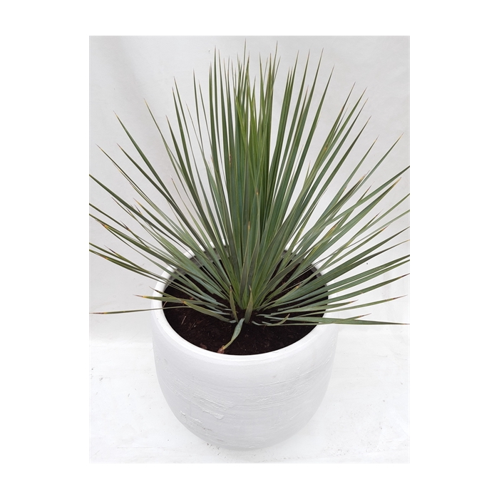 <h4>Arr.   Tuinplanten H%</h4>