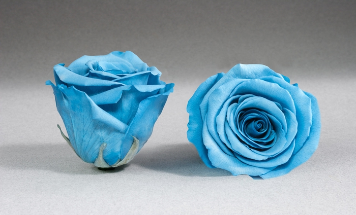 Rose stab. XXL Blu-01