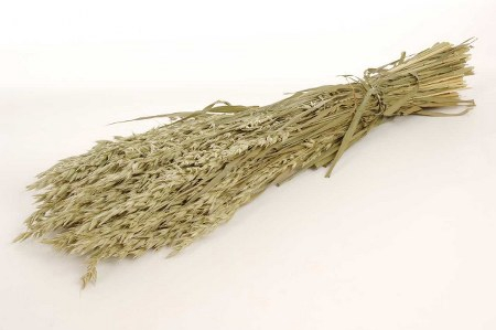 <h4>DRIED HORDEUM (GERST) NATURAL BUNCH</h4>