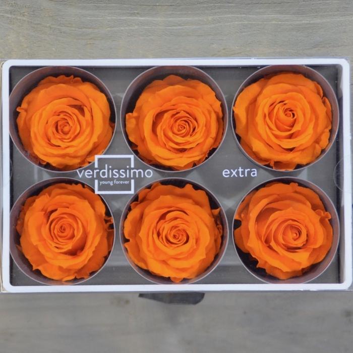 <h4>R PR M Orange</h4>