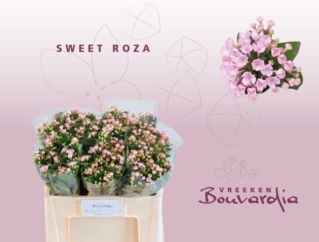 <h4>BOU EN SWEET ROZA</h4>