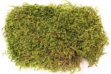 <h4>Hobby Flat Moss 30gr</h4>