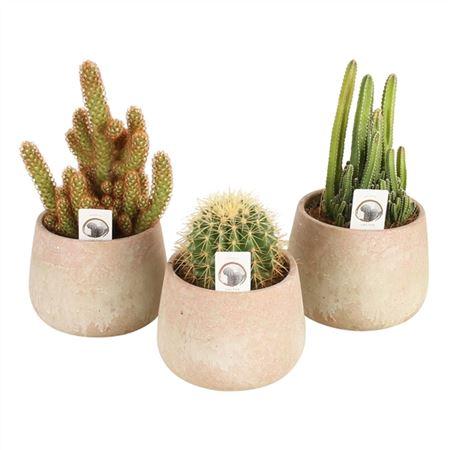 <h4>Cactus A41230183 Gemengd Keramiek Sandlook</h4>