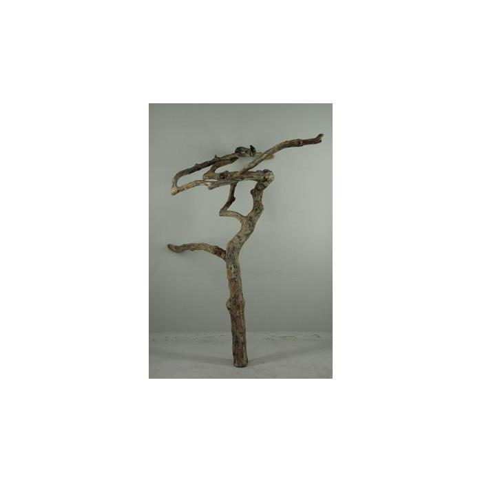 <h4>Coffee Tree Medium 110-150cm</h4>