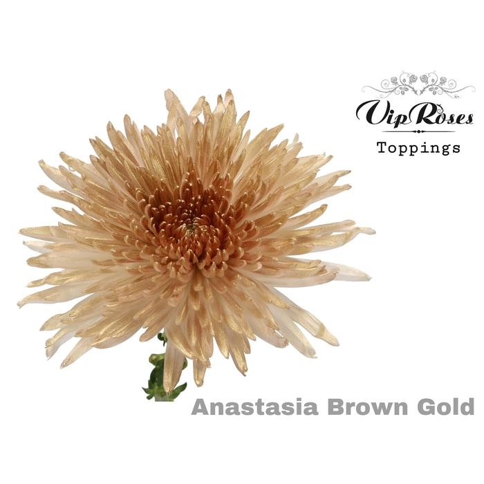 <h4>CHR G ANASTASIA BROWN GOLD</h4>