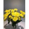 Chr Spray Yellow  Pina Colada Yellow