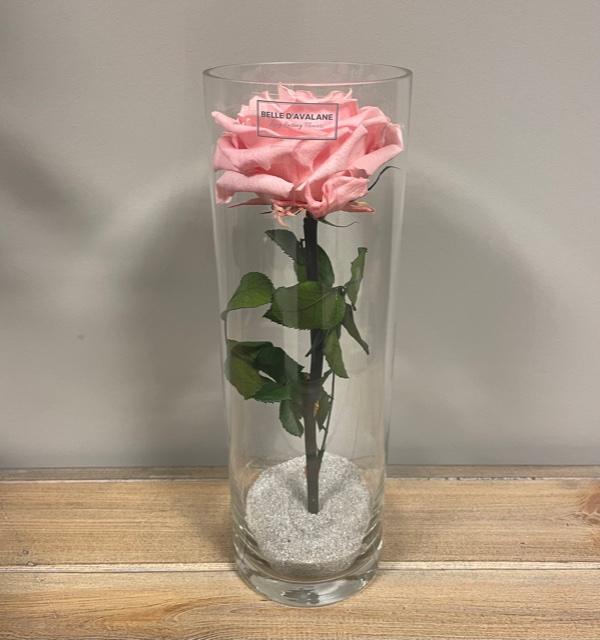 <h4>Cilinder d10x30h roze</h4>