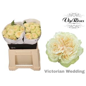 R GR VICTOR WEDDING+