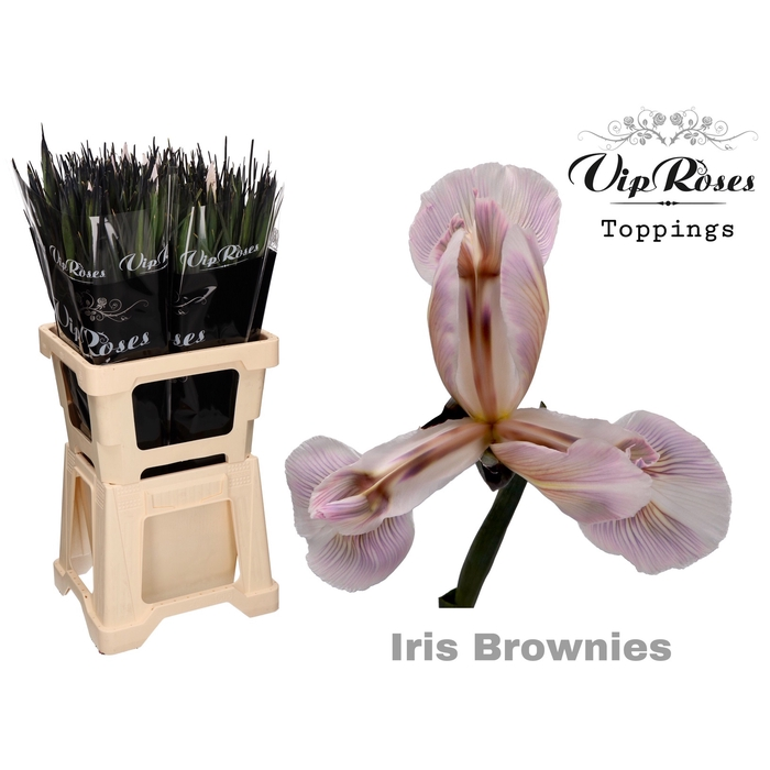 <h4>IRIS BROWNIES</h4>