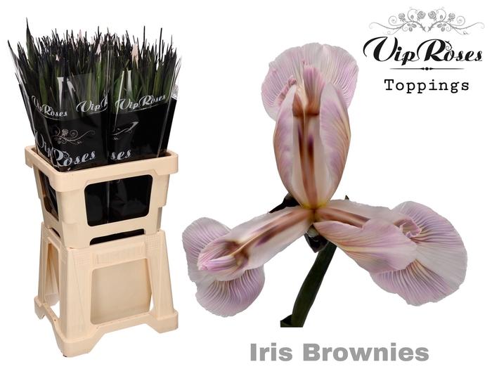 IRIS BROWNIES