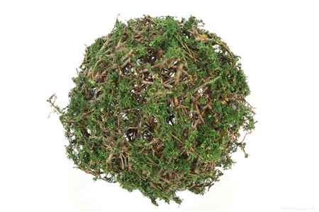 <h4>Ball Bonsai Mossed D25.0 Nat/d.green</h4>