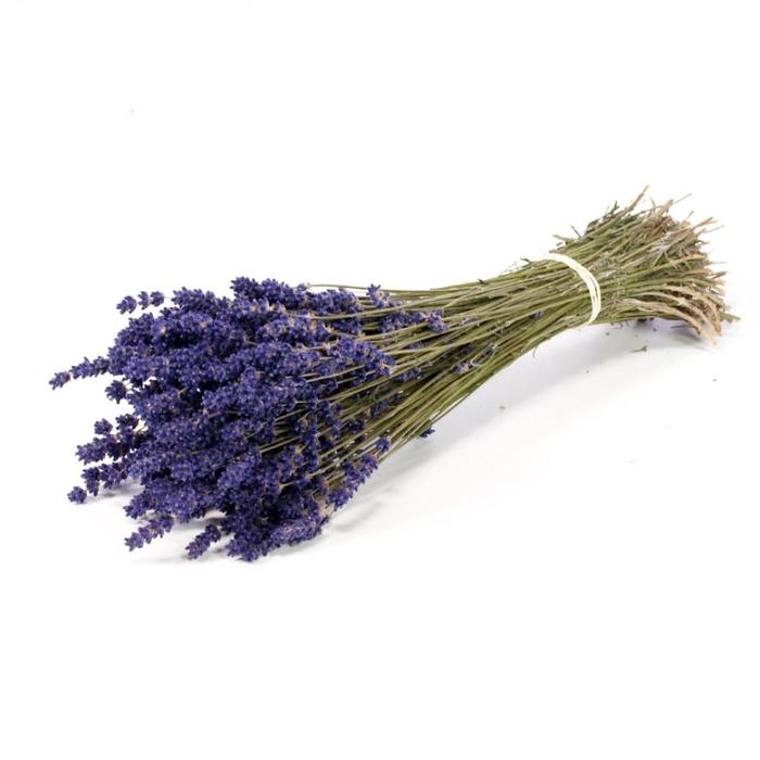 <h4>Lavender extra blue</h4>