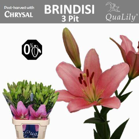 <h4>Li La Brindisi</h4>