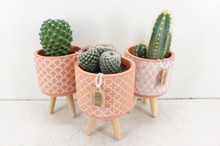 <h4>arr. UB - Cactus op pootjes terra L</h4>