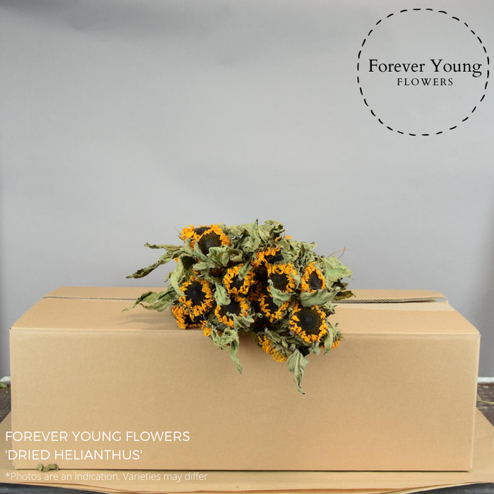 <h4>DRIED HELIANTHUS</h4>