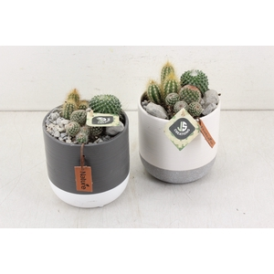 arr. Cactus JS2086 - Keramiek potje