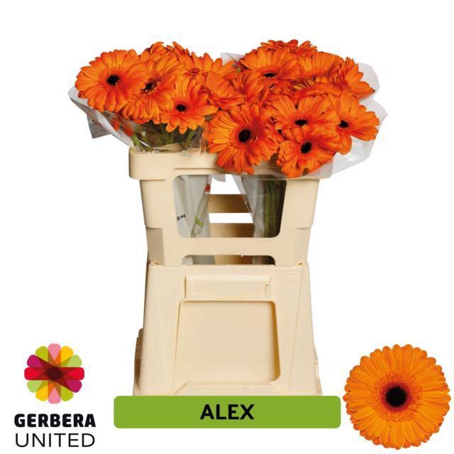 <h4>GE GR Alex water</h4>