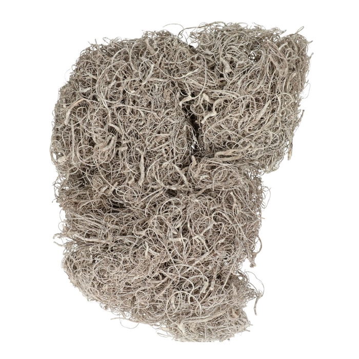 <h4>Dried articles Curly Moss 500g</h4>