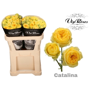 R TR CATALINA