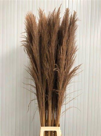 <h4>Corta Dried Nature 120cm</h4>