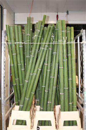 <h4>Bamboe 50-60 2meter</h4>