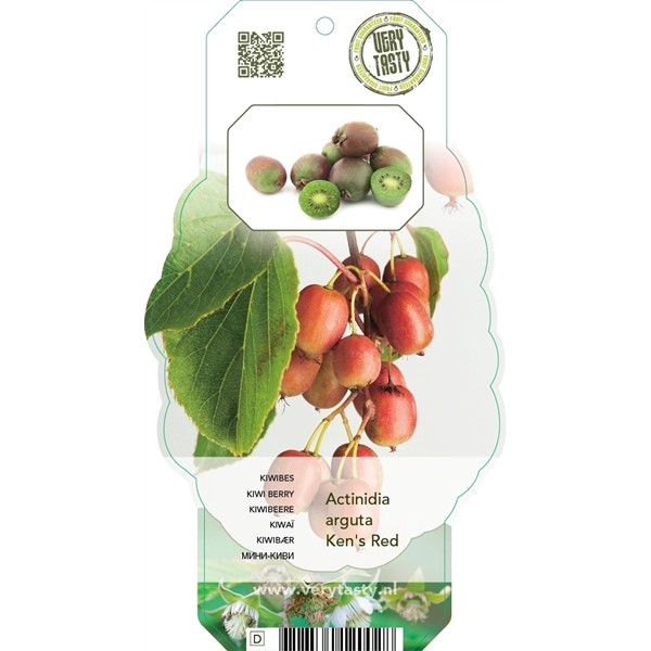 <h4>Actinidia arg. kens red.</h4>