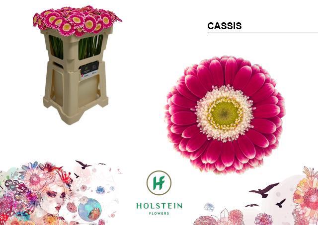 <h4>GE MI CASSIS</h4>