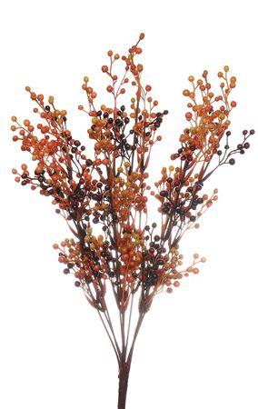 <h4>berry bush mike large orange</h4>