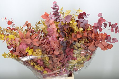 <h4>Dried Cynerea Autumn Preserved</h4>