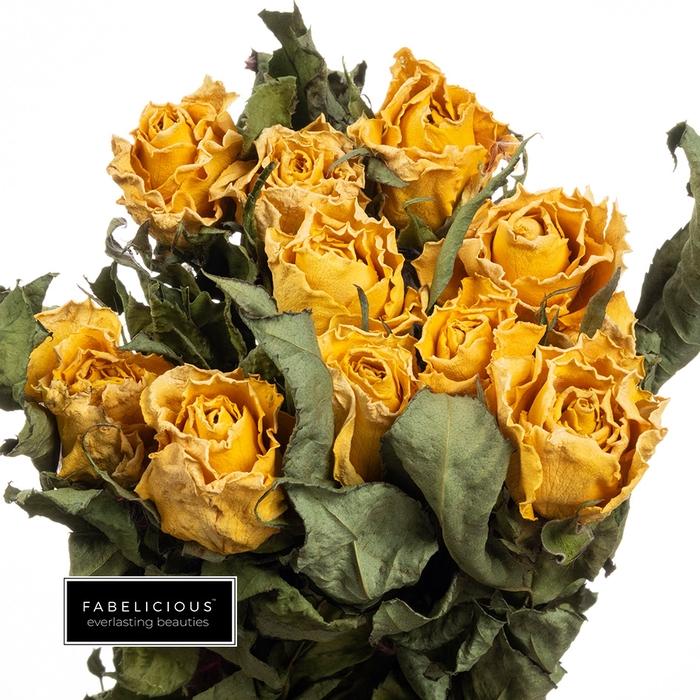 <h4>Dried Rosa grootbloemig Sunny  Cher</h4>